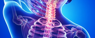 http://www.dreamstime.com/stock-images-anatomy-male-back-neck-pain-blue-image26852014