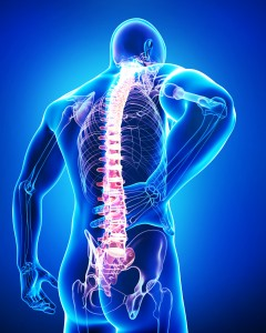 http://www.dreamstime.com/royalty-free-stock-photos-back-view-anatomy-male-back-pain-blue-image26852038
